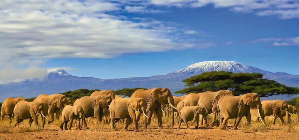 Plexiglas kudde olifanten 66x140