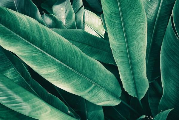 Bladeren op glas 80x120