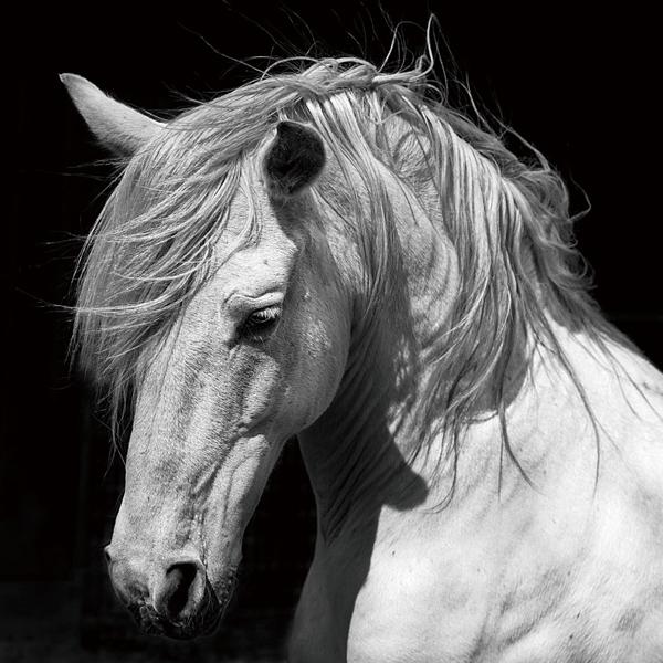 Paard op glas 100x100