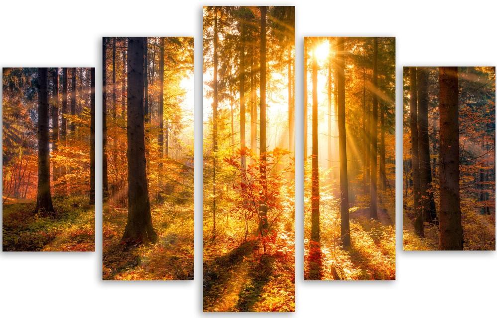 Meerluik fotokunst bos in ochtendzon 100x150