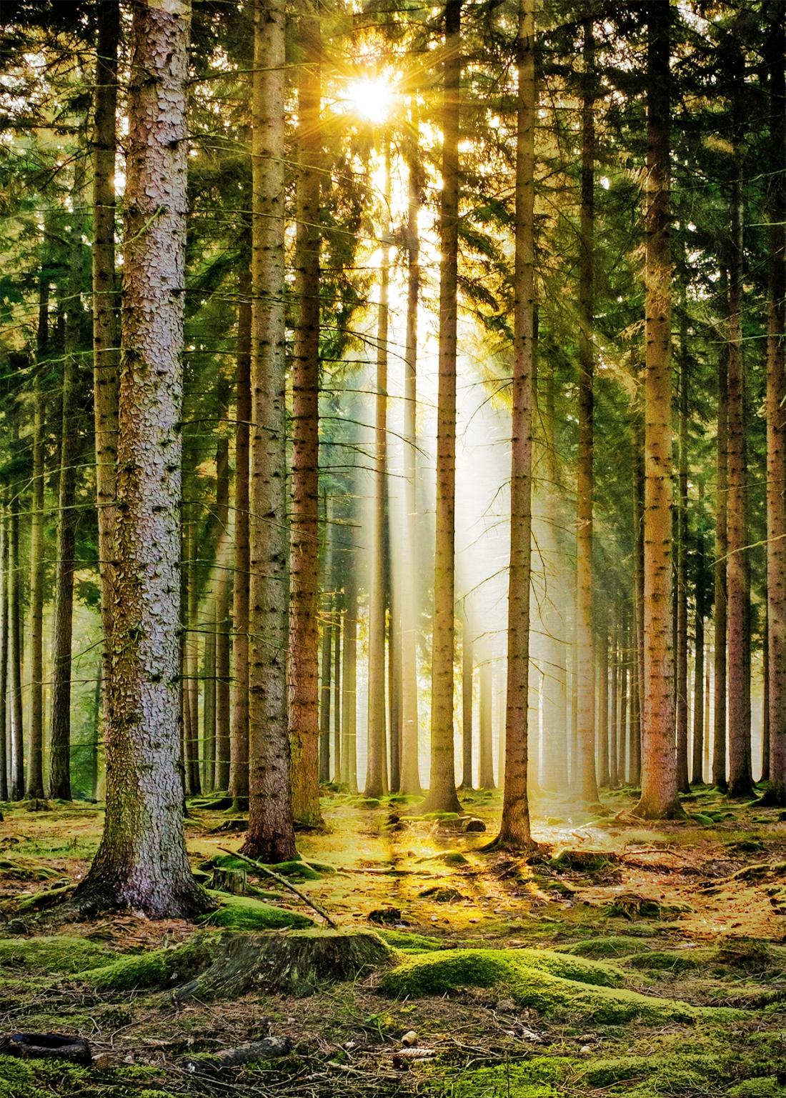 Dibond zonnige bossen 100x70
