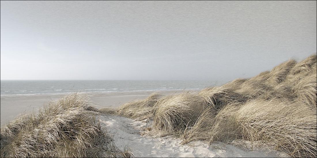 Dibond strandzicht duinen 100x200
