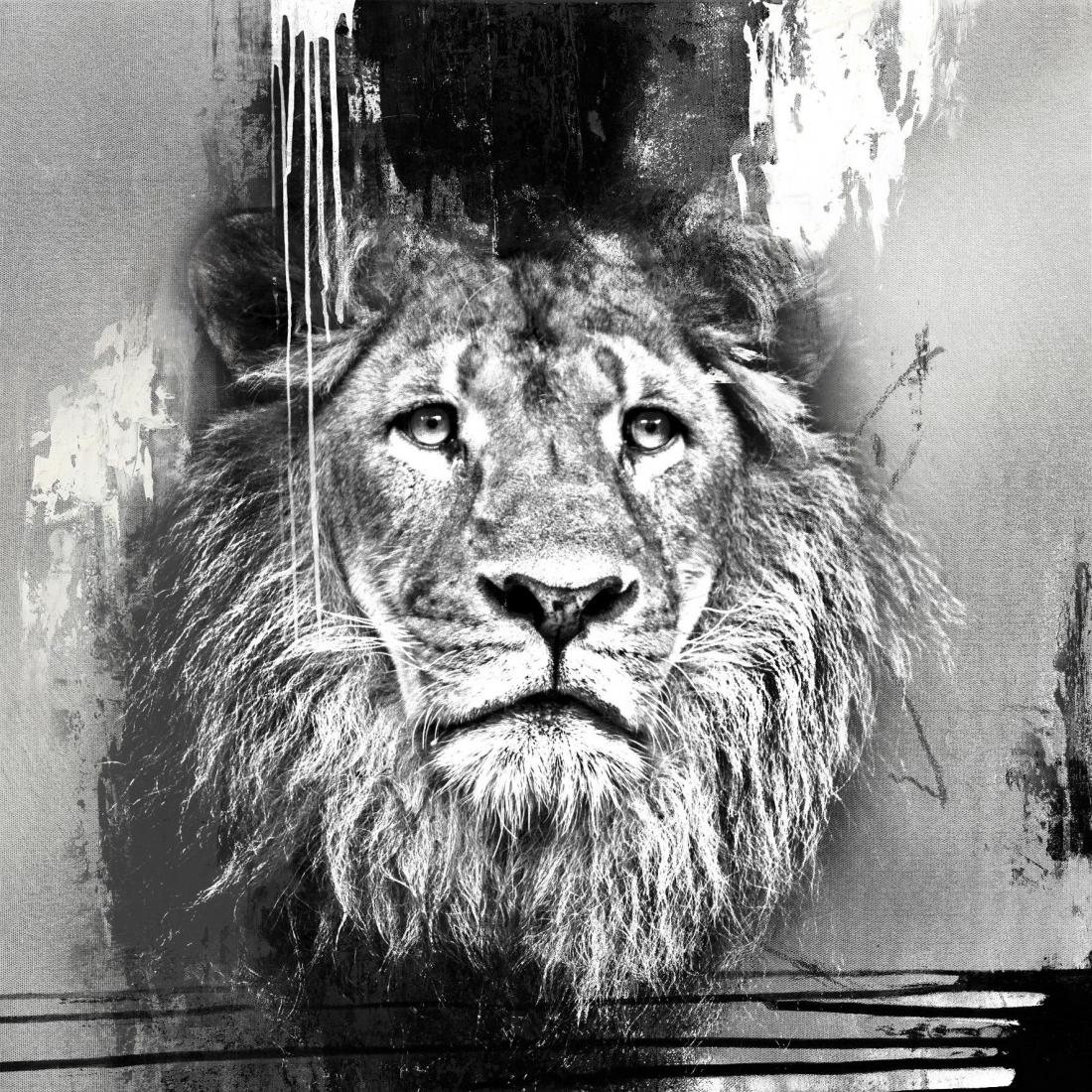 schilderij zilveren leeuw 100x100