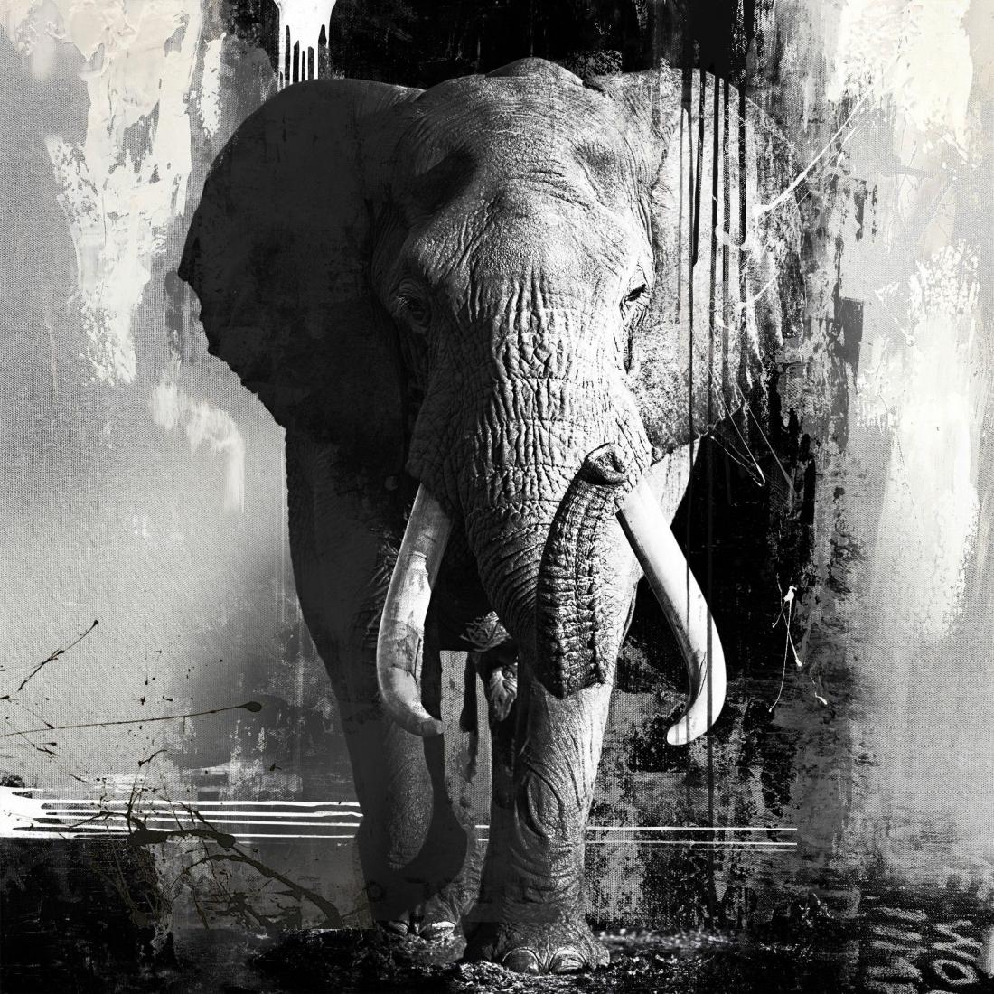 schilderij zilveren olifant 100x100