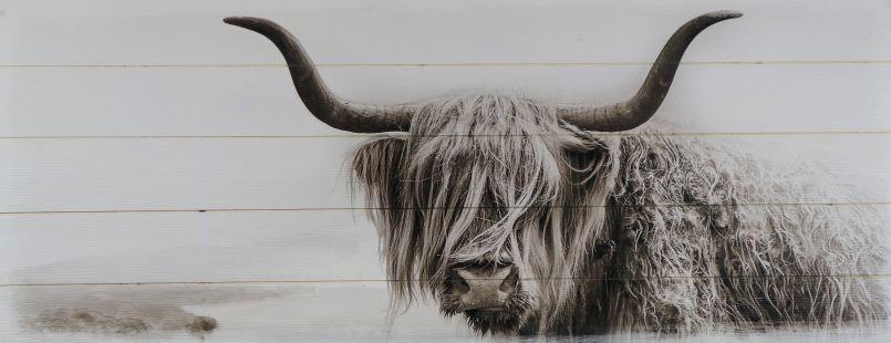 Schilderij fotokunst schotse hooglander 50x125