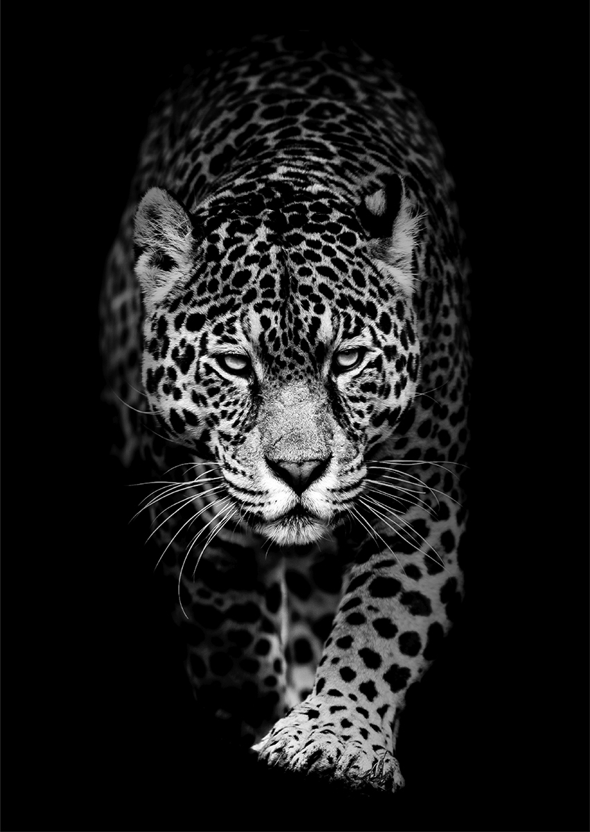 Leopard op glas 70x100