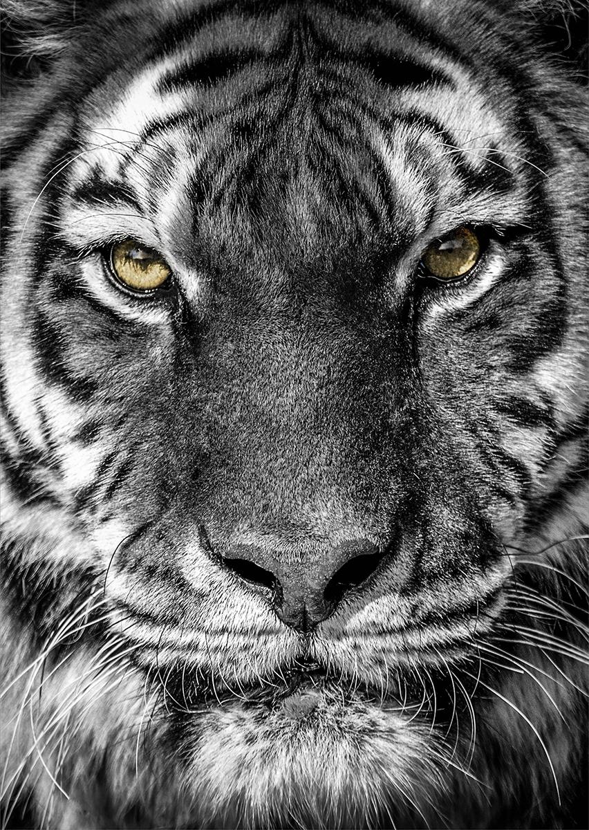 Eyes on the prey II op glas 70x100