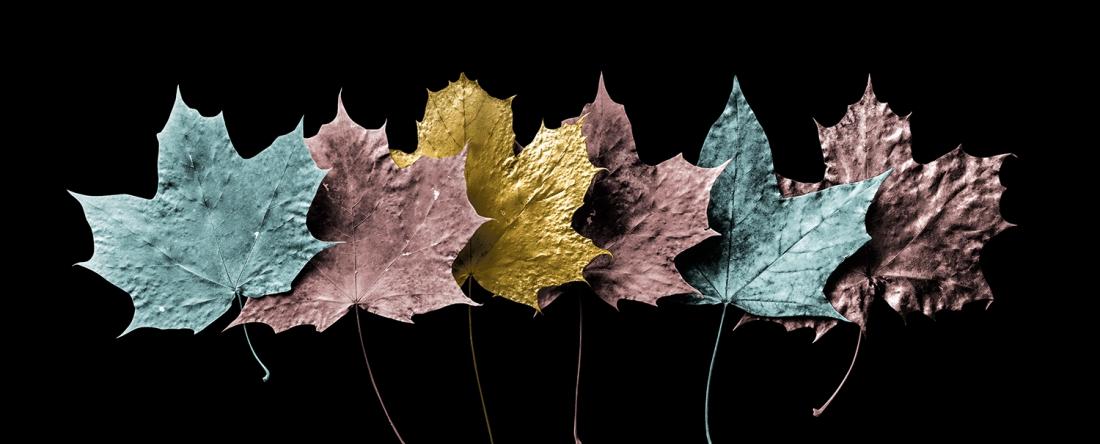 Fotokunst bladeren op glas 50x125
