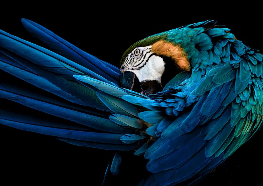 Parrot op glas 70x100