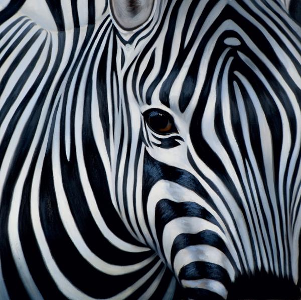 schilderij Zebra 75x75
