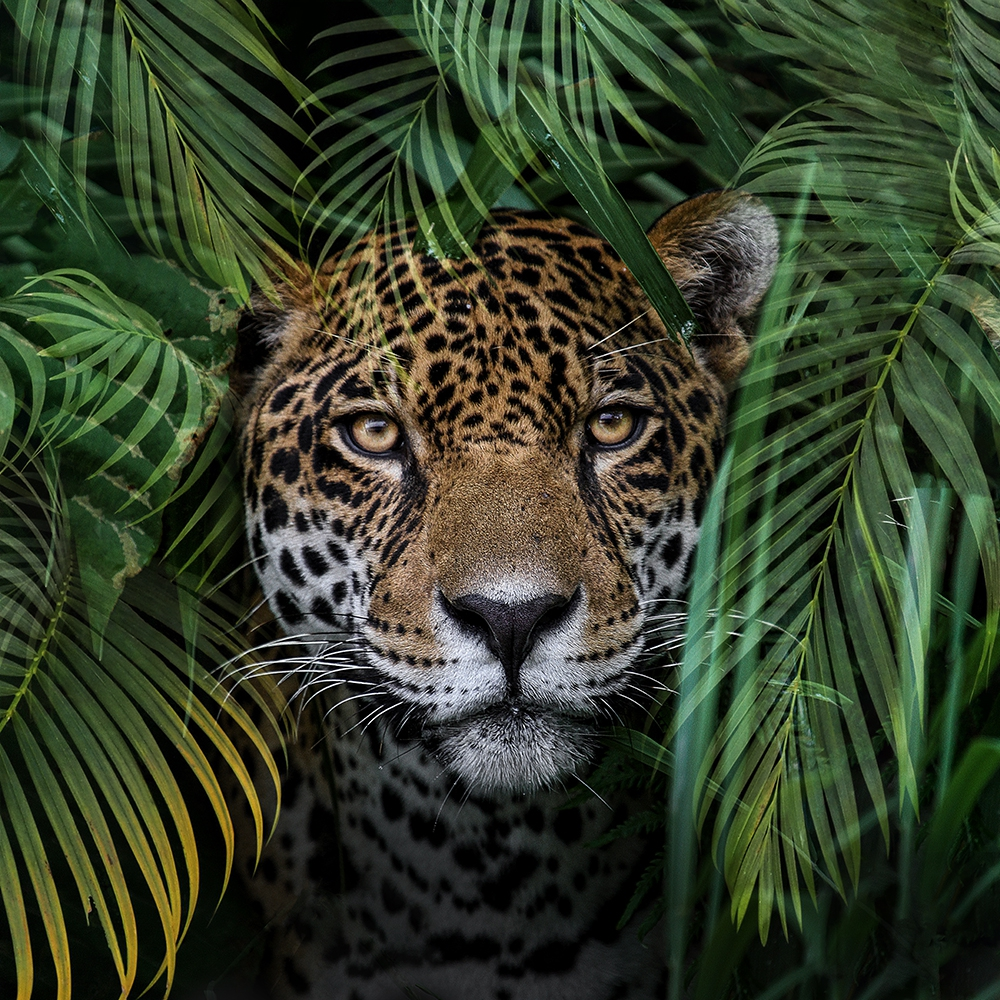 Fotokunst luipaard 70x70