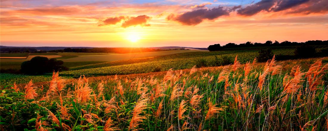 Fotokunst zonsondergang op de velden 60x150