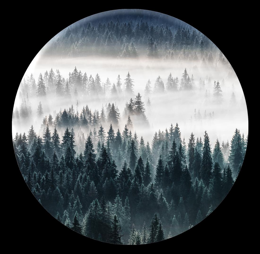 Schilderij fotokunst Forest rond 70 cm