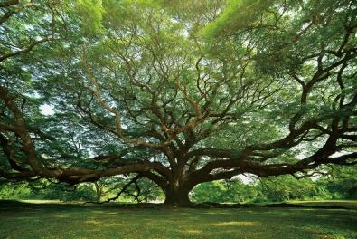 Levensboom op glas 100x150