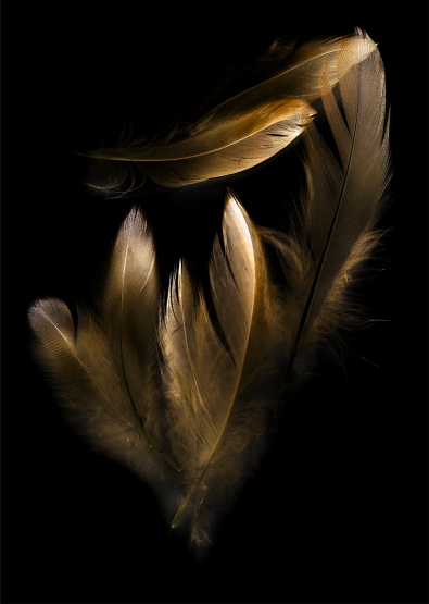 Gold feathers op glas 70x100