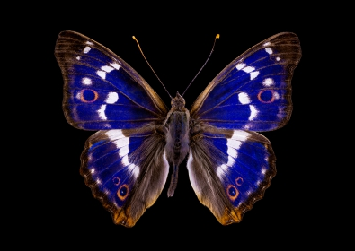 Butterfly op glas 70x100
