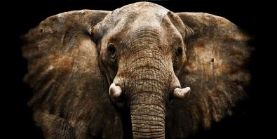 Fotokunst olifant 70x140