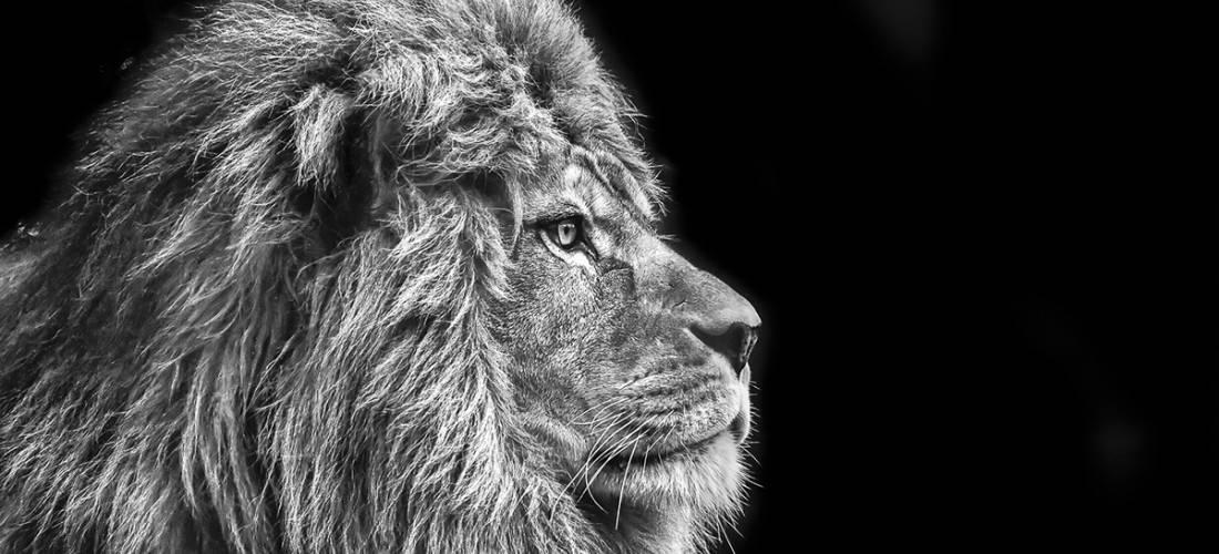 Glas schilderij leeuw